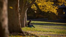 woman sitting next to tree with laptop on campus
