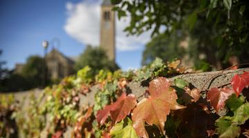Photo of autumn ivy with tower in background
